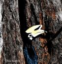 image 8125 of BUCEROTIDAE Hornbills