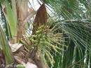 image 1746 of Brown-throated Sunbird
