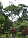 image 3816 of Poring, Kinabalu Park