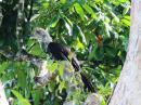 image 8021 of Temburong