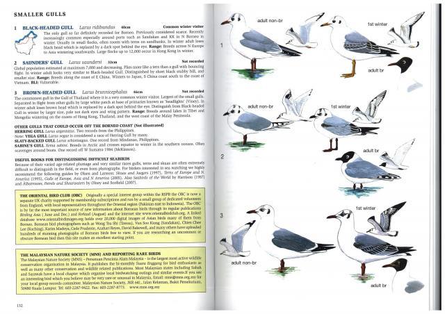 image 2609 of Black-headed Gull