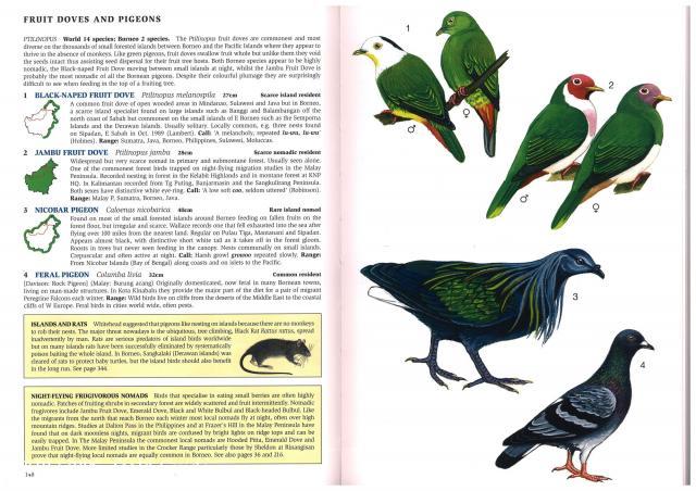 image 2661 of Nicobar Pigeon
