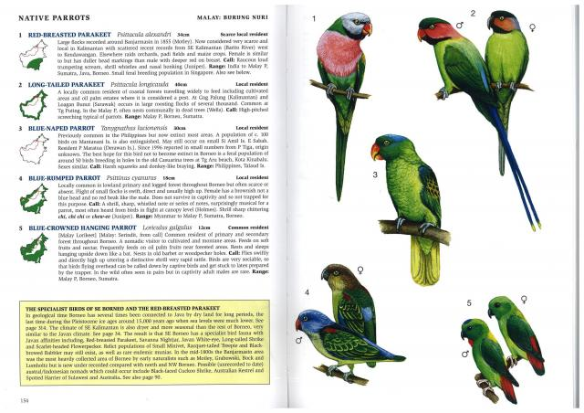 image 2673 of Blue-crowned Hanging Parrot