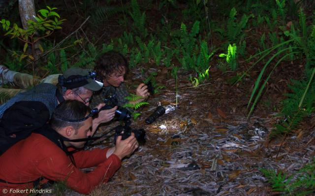 image 6805 of Large-tailed Nightjar