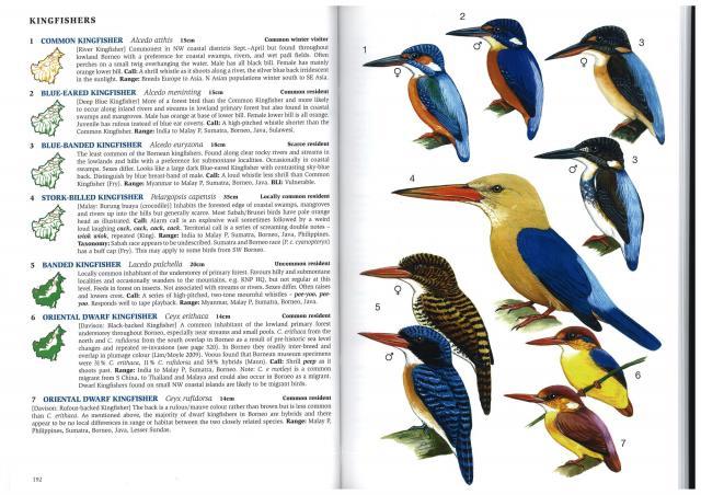 image 2759 of Stork-billed Kingfisher