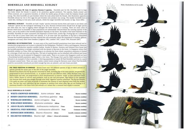 image 2780 of Rhinoceros Hornbill
