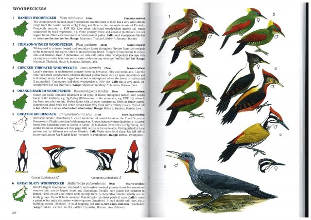 image 2803 of Crimson-winged Woodpecker