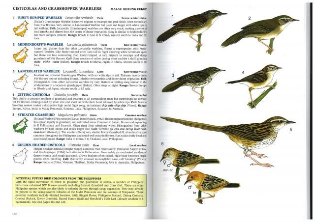 image 2925 of Golden-headed Cisticola