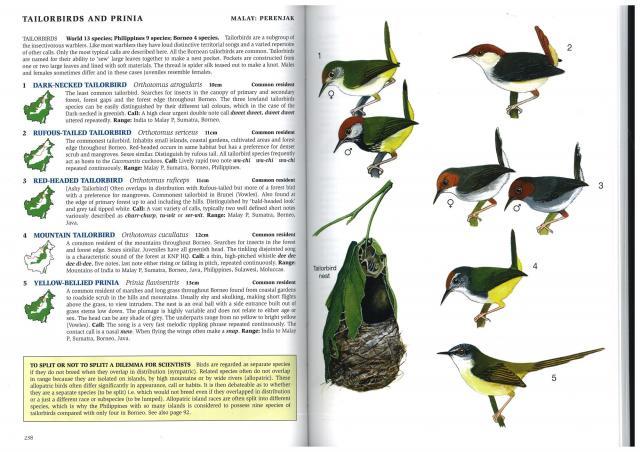 image 2886 of Red-headed Tailorbird