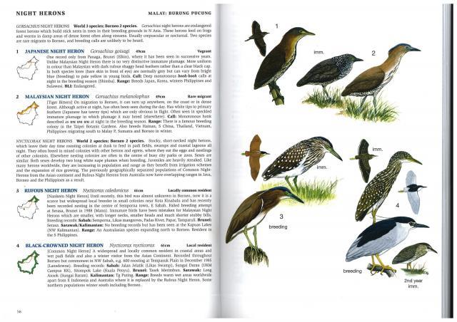 image 2381 of Black-crowned Night Heron
