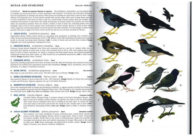 image 3023 of European Starling