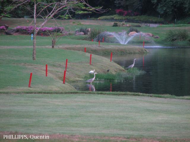 image 3274 of Grey Heron