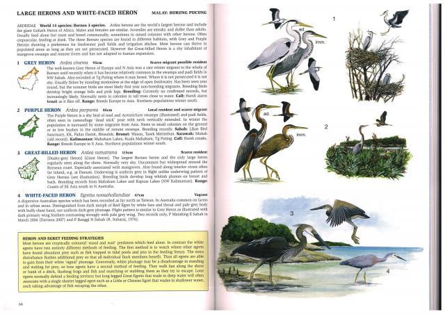 image 2400 of Grey Heron