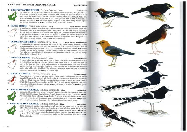 image 3080 of White-crowned Forktail