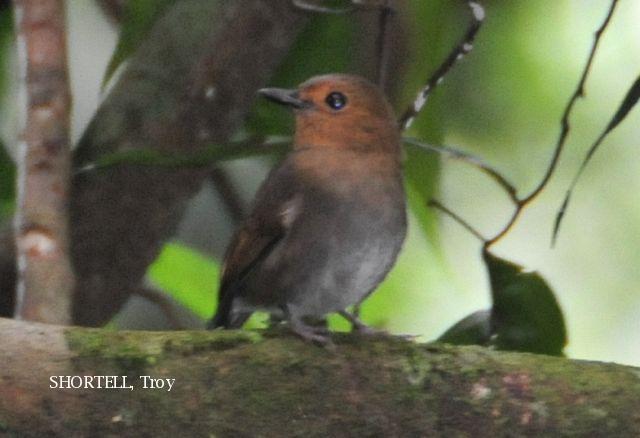 image 3619 of Dark Blue Flycatcher