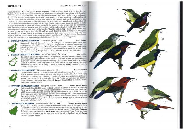image 3167 of Temminck's Sunbird