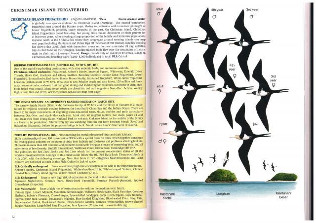 image 2413 of Christmas Island Frigatebird
