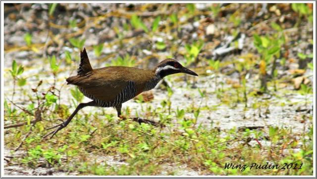 image 6325 of Barred Rail