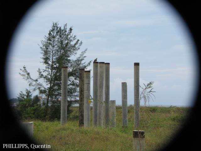 image 1516 of Osprey
