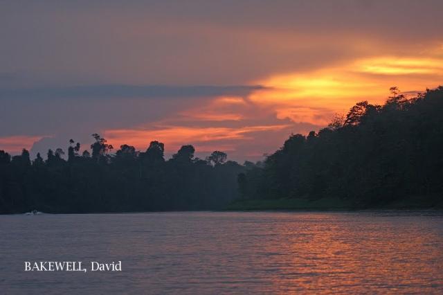 image 4365 of Kinabatangan River