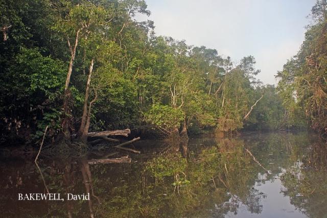 image 4337 of Kinabatangan River