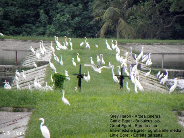 image 5649 of Tutong Sewage Works