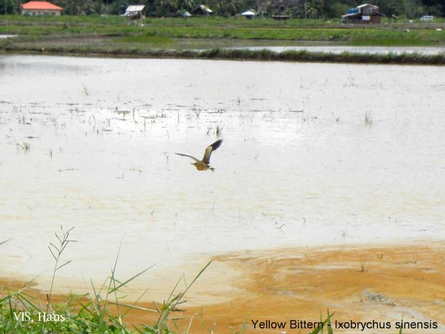 image 5652 of Wasan ricefields