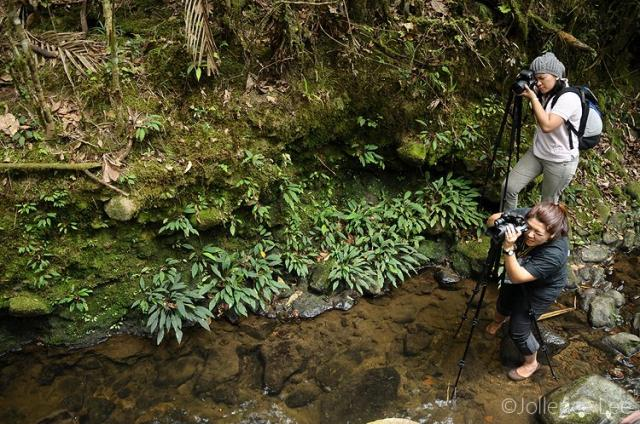 image 4449 of HQ, Kinabalu Park