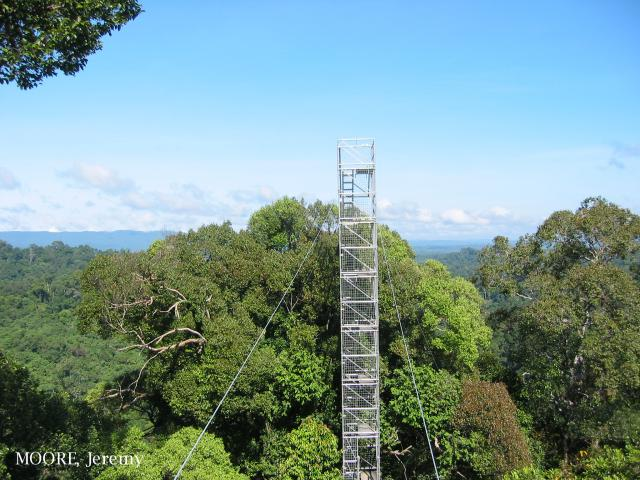 image 5457 of Ulu Temburong