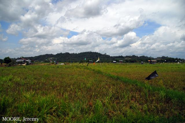 image 5456 of Wasan ricefields