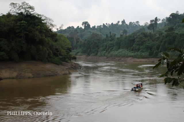 image 7630 of Deramakot Forest Management Unit