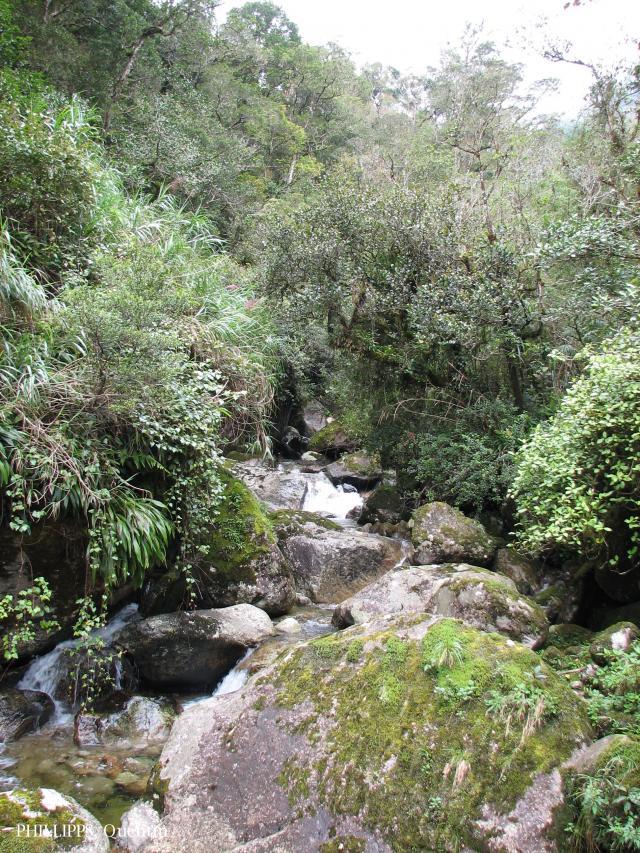 image 3779 of Mesilau, Kinabalu Park