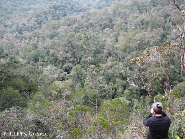 image 3783 of Mesilau, Kinabalu Park
