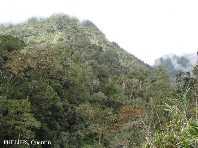 image 3782 of Mesilau, Kinabalu Park