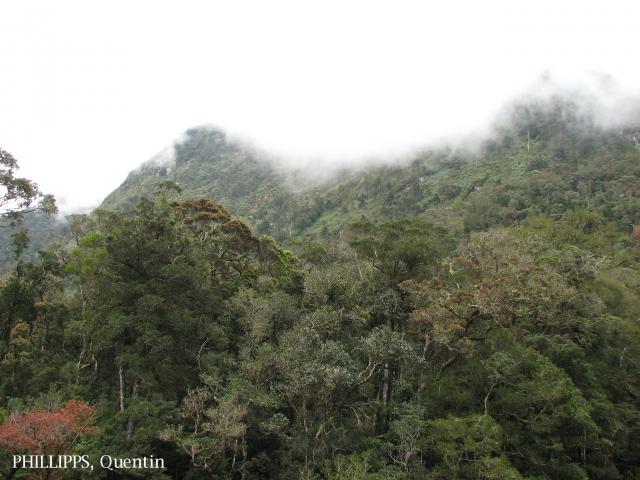 image 3785 of Mesilau, Kinabalu Park