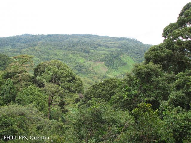 image 3811 of Poring, Kinabalu Park
