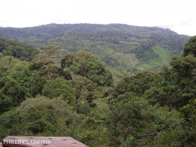 image 3822 of Poring, Kinabalu Park