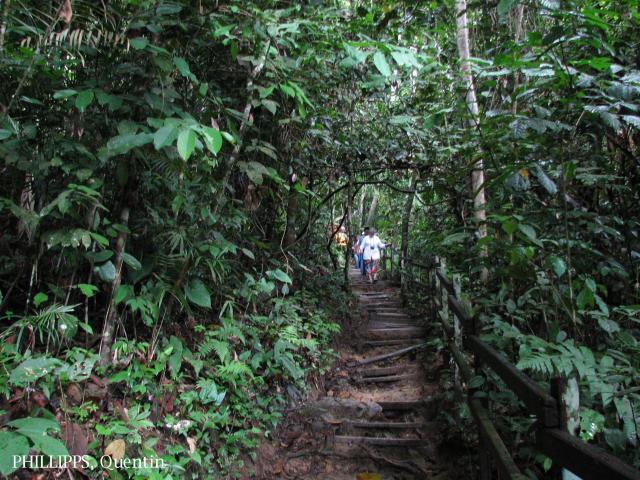 image 3814 of Poring, Kinabalu Park
