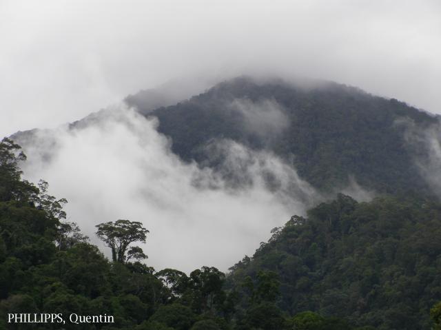 image 3819 of Poring, Kinabalu Park