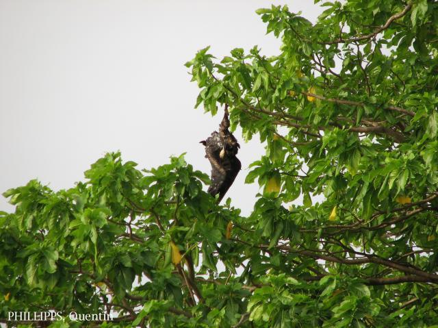 image 3553 of Pulau Tiga
