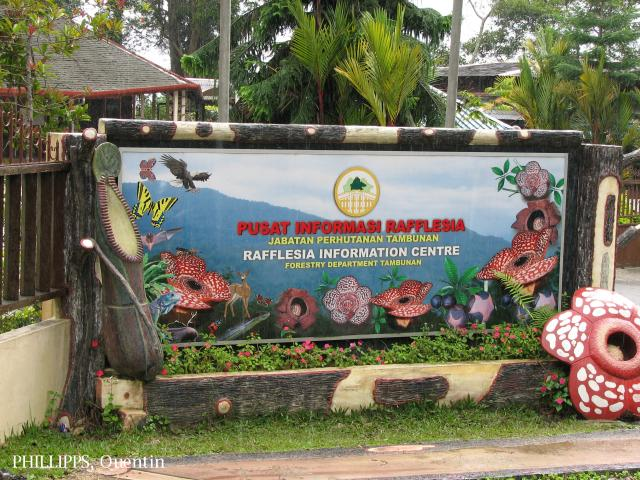image 3824 of Rafflesia Centre