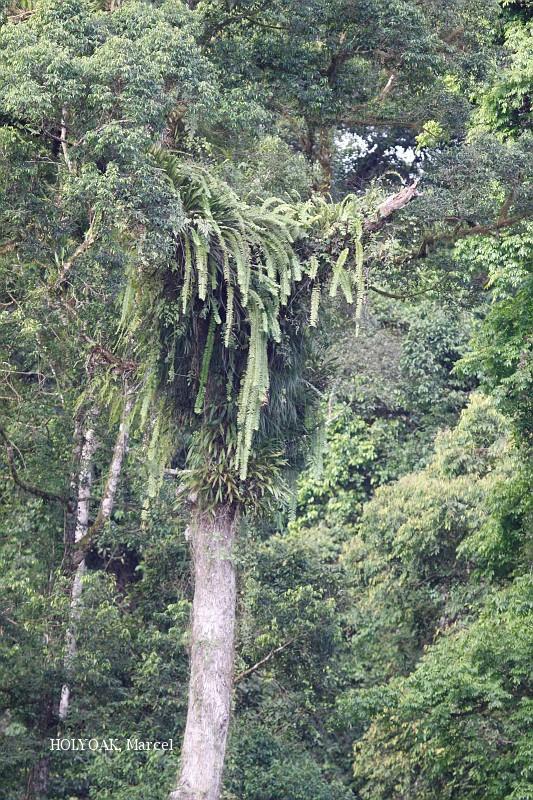 image 3896 of DanumBRL