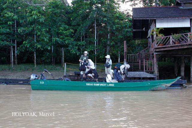 image 3888 of Kinabatangan River