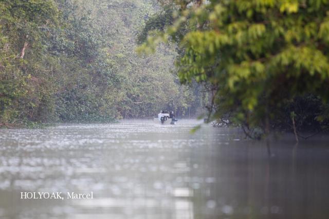 image 3875 of Kinabatangan River