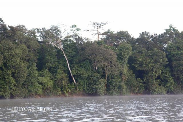 image 3876 of Kinabatangan River
