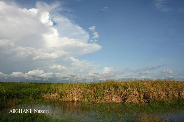 image 4731 of Curtin Lakes Miri