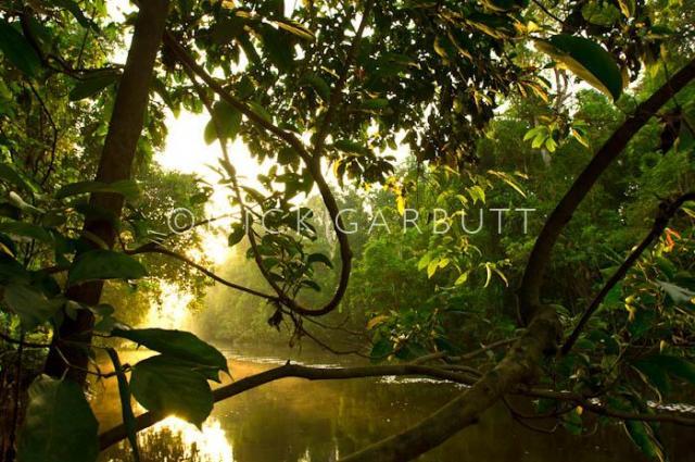 image 4971 of Kinabatangan River