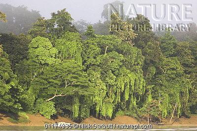 image 4902 of Kinabatangan River