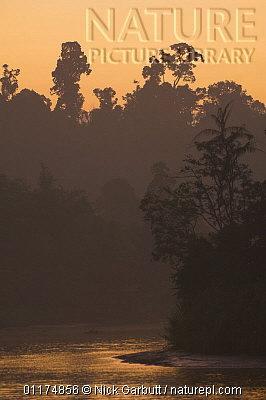 image 4905 of Kinabatangan River