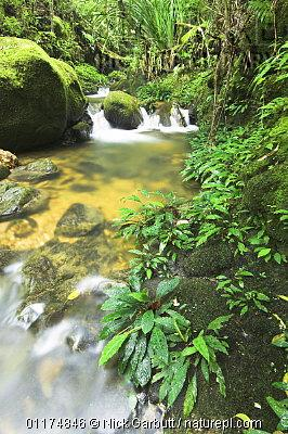 image 4891 of HQ, Kinabalu Park